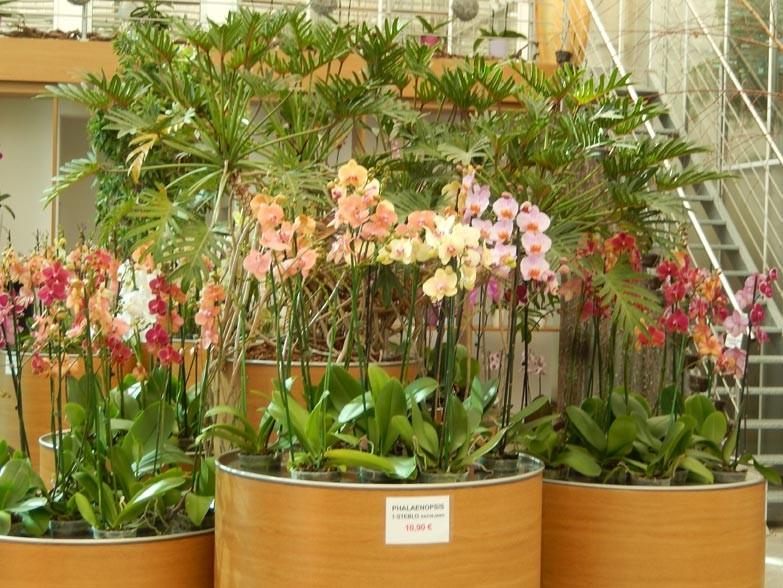 Razstava orhidej in pridelava bučnega olja